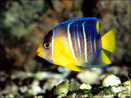 Морская рыбка, Фото фотография