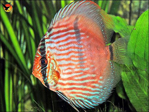 химический состав fish hungry