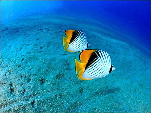 Рыбки на фоне белого песка, Фото фотография