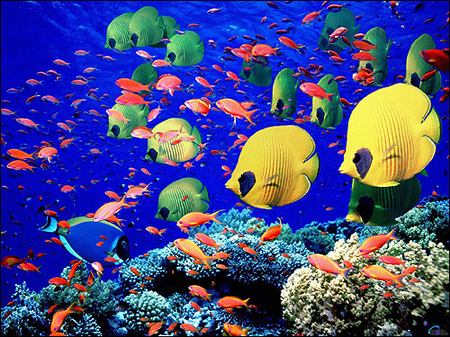 Жизнь кораллового рифа, Фото фотография