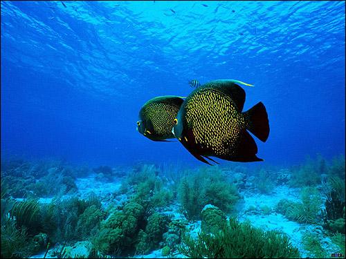 Морское дно, рыбки, Фото фотография картинка