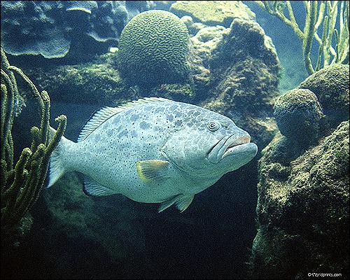 Рыба, Фото фотография картинка