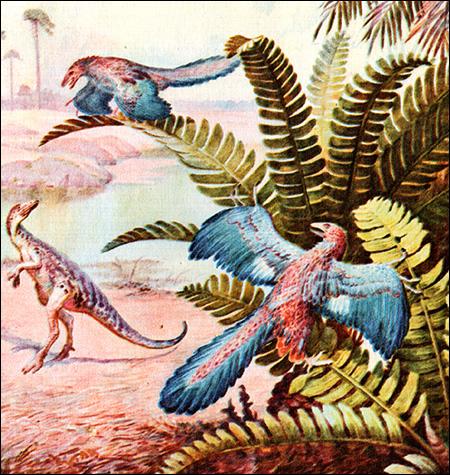 Археоптериксы (Archaeopteryx), Рисунок картинка птицы