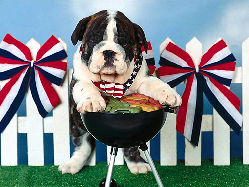 Щенок английского бульдога, Фото фотография картинка собаки