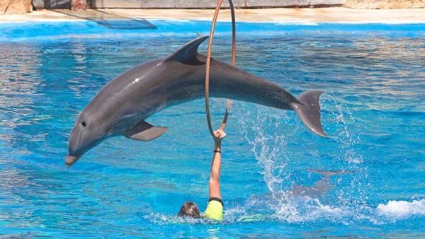 Дельфин прыгающий через обруч, фото киты фотография картинка