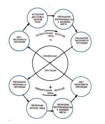 Гомеостаз в популяции животных,регулируемый доступностью пищевых ресурсов, рисунок картинка схема