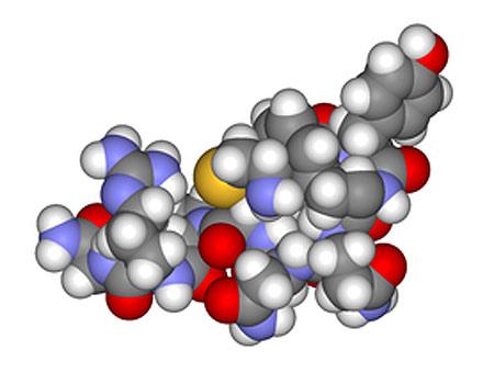 Антидиуретический гормон (вазопрессин), рисунок картинка схема