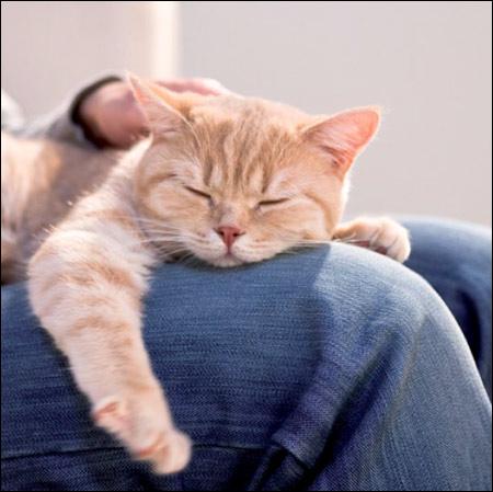 Заболевания мочевыделительной системы: основные аспекты профилактики и лечения собак и кошек