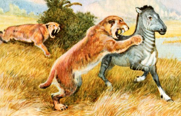 Махайроды, фото доисторические хищники рисунок картинка