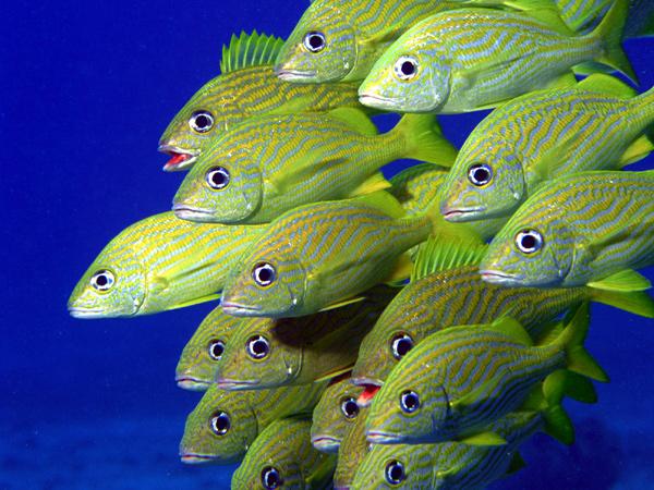 Косяк морских рыб, фото животные фотография