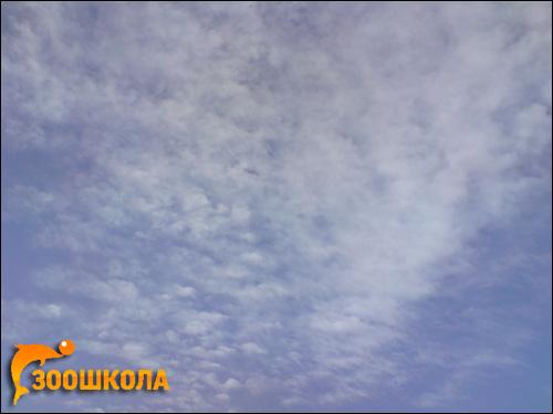 Небо с облаками. Фото, фотография картинка
