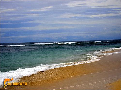 Берег океана. Вьетнам. Фото, фотография картинка