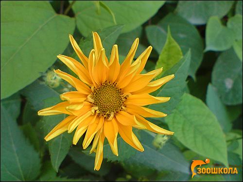 Оранжевый цветок. Фото, фотография цветы