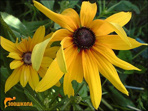 Жёлтые цветы. Фото, фотография картинка