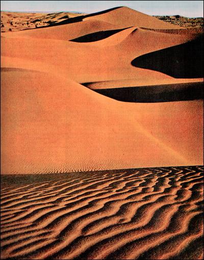 Африка. Пустыня. Фото, фотография