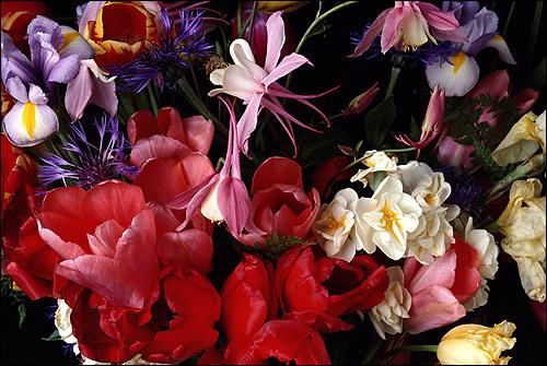 Букет цветов (тюльпаны, ирисы, васильки и пр.). Фото, фотография