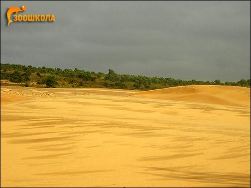 Южный Вьетнам. Пустыня после тайфуна. Фото, фотография