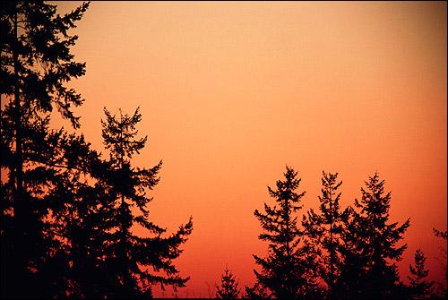 Красно-розовый закат. Верхушки елок. Фото, фотография