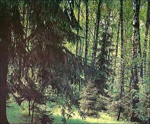 Смешанный лес. Фото, фотография