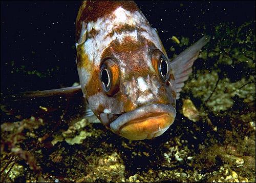 Рыба. Фото, фотография