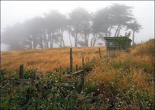 Утренний туман. Лето. Фото, фотография