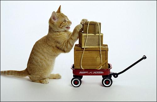 Кошка и багаж. Путешествие и поездки с кошкой. Фото, фотография картинка животные