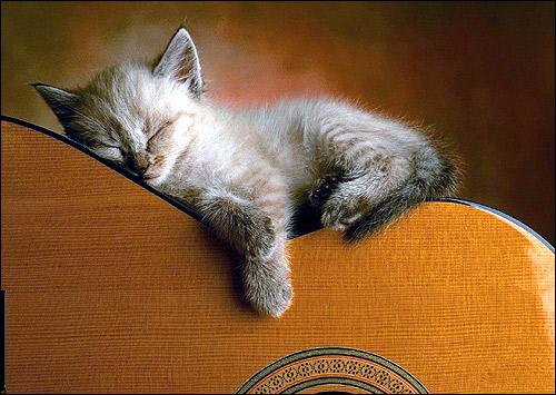 Маленький котенок спит на гитаре. Фото, фотография картинка кошки