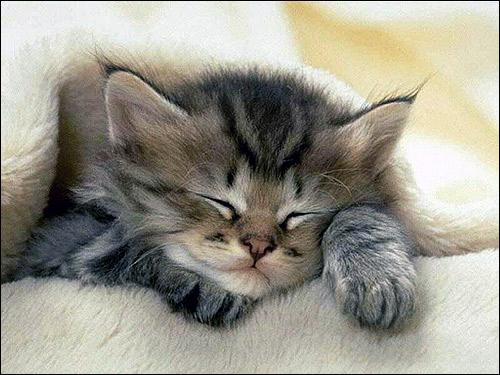 Маленький котенок спит. Фото, фотография картинка кошка