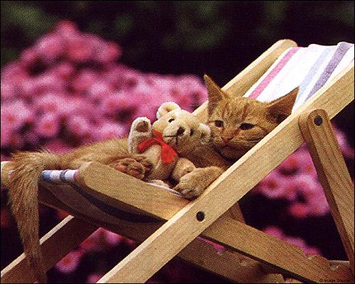 Котенок, лежащий на раскладном пляжном стуле. Фото, фотография картинка кошки