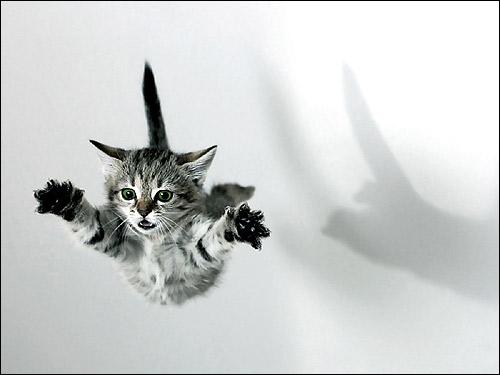 Серый полосатый котенок с зелеными глазами летит в воздухе. Фото, фотография картинка