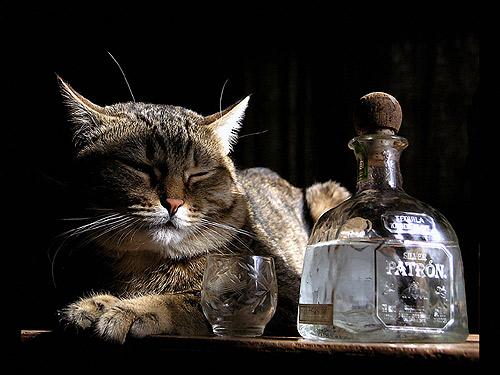 Кот лежит рядом с бутылкой виски. Фото, фотография картинка
