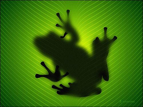 Тень лягушки на листе. Фото, фотография картинка