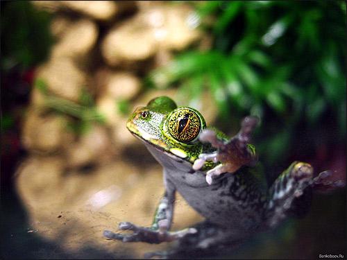 Лягушка. Фото, фотография