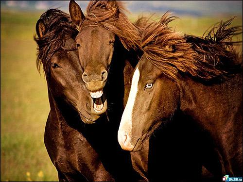 Три лошади. Фото, фотография картинка