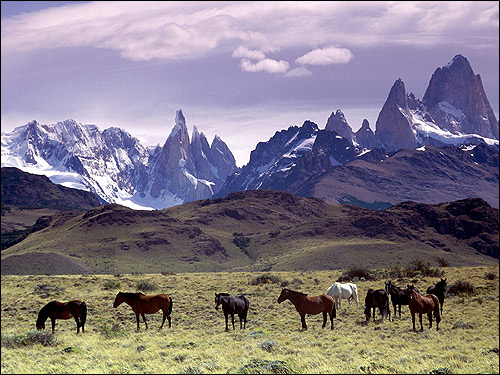 Лошади на горном пастбище. Фото, фотография картинка