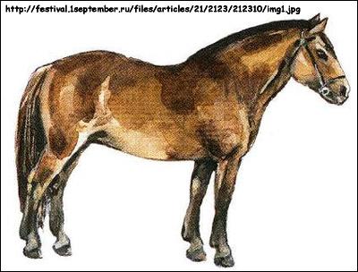 Башкирская лошадь. Рисунок, картинка, породы лошадей