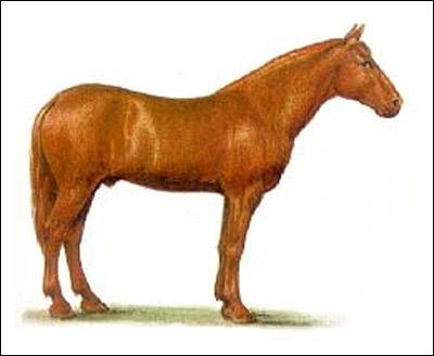Русский  рысак, русская рысистая лошадь. Картинка рисунок породы лошадей