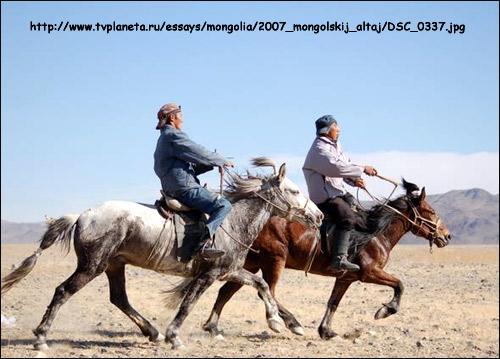 Монгольская  лошадь. Фото, фотография картинка породы лошадей