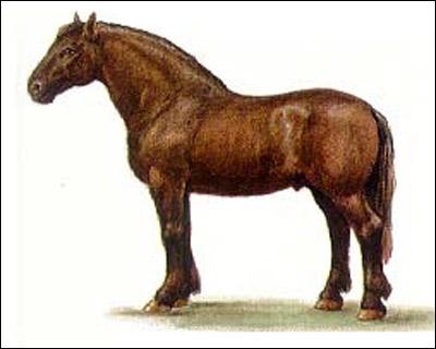 Русская тяжеловозная лошадь, русский тяжеловоз. Рисунок, картинка породы лошадей