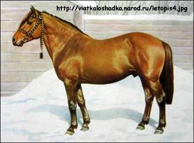 Вятская лошадь. Фото, фотография картинка породы лошадей