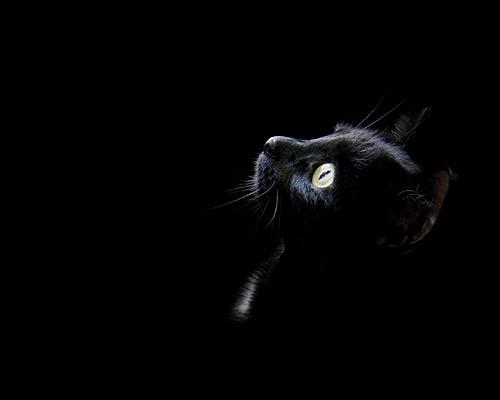 Черная кошка в черной комнате. Фото, фотография картинка