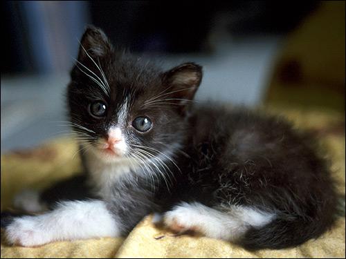 Маленький котенок. Фото, фотография картинка животные