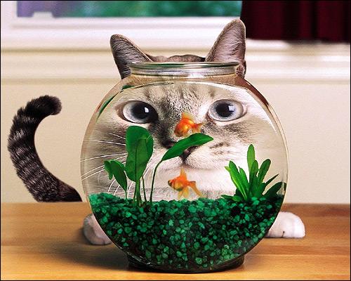 Кошка, сидящая за аквариумом. Смешная картинка. Фото, фотография