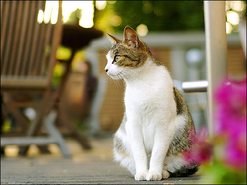 Сидящая кошка. Фото, фотография картинка