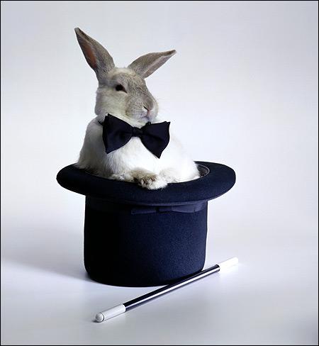 Кролик в шляпе. Фото, фотография зайцеобразные животные