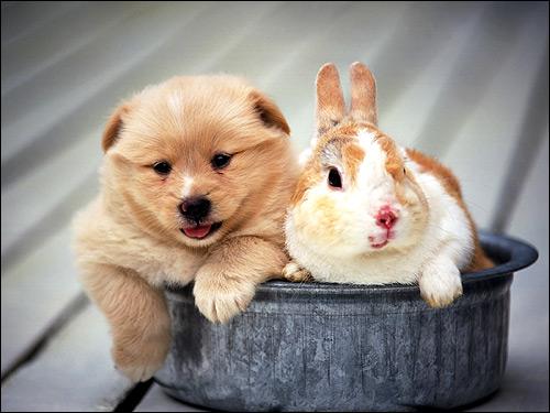 Щенок и кролик в железной миске. Фото, фотография картинка животные