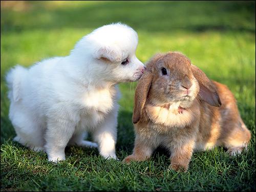Белый щенок и крольчонок-баран. Фото, фотография картинка животные