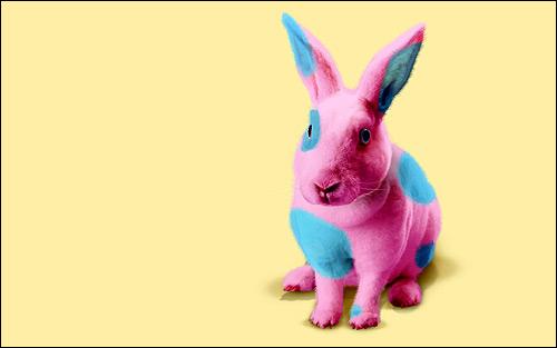 Розовый кролик, крашеный кролик. Фото, фотография прикольная картинка грызуны