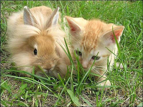 Кролик и котенок в траве. Фото, фотография картинка животные