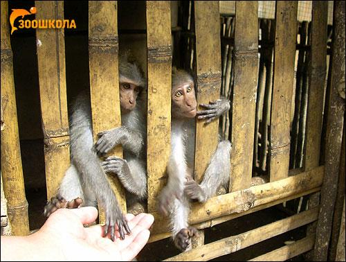 Молодые обезьянки. Фото, фотография картинка приматы